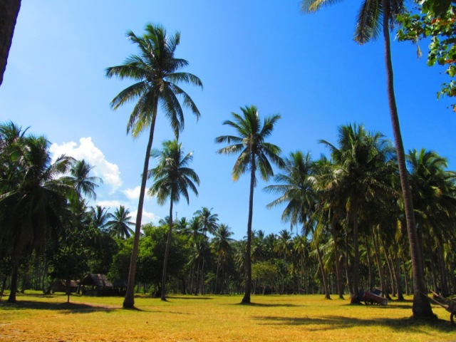 The coconut trees along the Krandangan beach